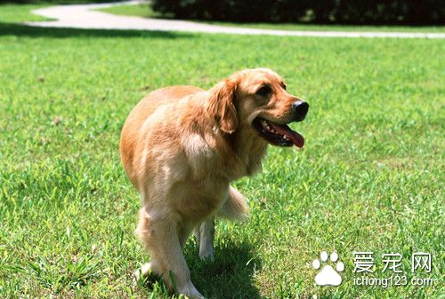 Canine coaching methodology Canine indoor coaching saves effort and time